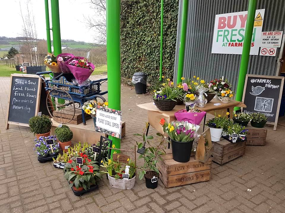 Fresh flowers from SEED & SOW
