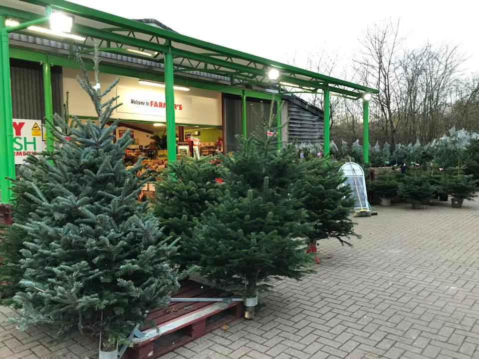 Christmas trees have arrived at Farmer's